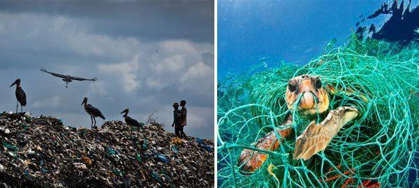 inquinamento causa prodotti usa e getta
